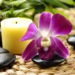 Pink orchid with stones — Stock Photo