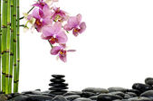 Orchid on pebble — Stock Photo