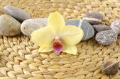 Stones and yellow orchid — Stock Photo