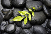 Green leaf on wet pebble — Stock Photo