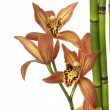 Orchid and bamboo sticks — Stock Photo