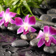Stock Photo: Still life with stone and pink orchid