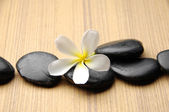 Frangipani and therapy stones — Stock Photo