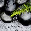 Fern and pebble on water drops — Stock Photo