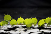 Still life with green branch ivy — Stock Photo