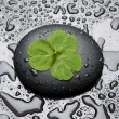 Stock Photo: Three leafs clover and zen stones in water drops