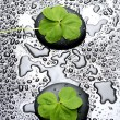 Three leafs clover and zen stones in water drops — Stock Photo