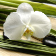 Orchid on palm leaf — Stock Photo
