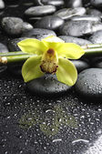 Pink orchid on wet pebble — Stock Photo
