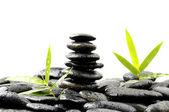 Plant and zen black stones — Stock Photo
