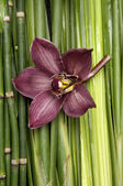 Orchid on green plant — Stock Photo