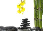 Bodegón con orquídeas y piedras — Foto de Stock