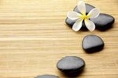 Flower with stones — Stock Photo