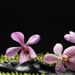 Orchid and stones with green fern — Stock Photo