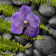 Orchid and zen stone on palm — Stock Photo #28665975