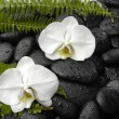 Stock Photo: Orchid and stones with set of green fern