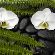 Orchid and green fern on pebbles — Stock Photo