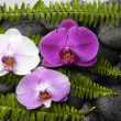 Stock Photo: Orchid and green fern on pebbles