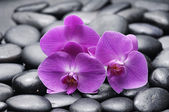 Orchid on wet pebbles — Stock Photo