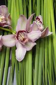 Ramo orchidea con texture di foglia di palma — Foto Stock