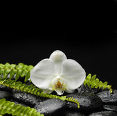 Orchid and stones with set of green fern — Stock Photo