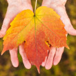 Hands holding a leaf — Stock Photo