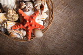 Background with shells and starfish and with blank space for you — Stock Photo