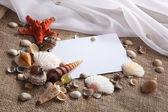 Shells and starfish — Stock Photo