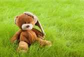 Teddy bear in grass — Stock Photo