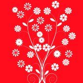 White flowers on red background — Stock Photo
