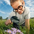 Stock Photo: Child observing nature