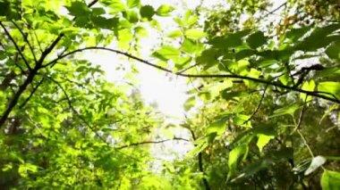 Szczelnie-do góry drzewa liści, dolly strzał — Wideo stockowe