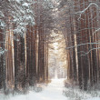 Stock Photo: Beautiful winter forest and road
