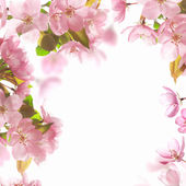 Background with pink blossom — Stock Photo