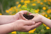 男と少年の手で緑の植物を保持. — ストック写真
