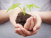 Boy hands holding young plant — Foto Stock