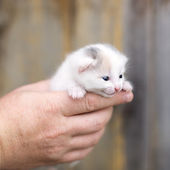 Little kitten sitting on the palms — Stock Photo