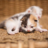 Two sleeping kittens — Stock Photo