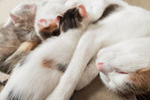 Mother cat and kittens — Stock Photo