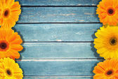 Wooden blue texture  and flowers — Stock Photo