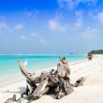 Tree Trunk on the Sandy Beach - Maldives — Stock Photo #21840611