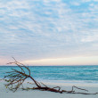 Dead tree on Beach — Foto de stock #21841761