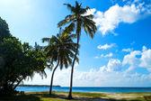 Palm tree and blue sky — Stock Photo
