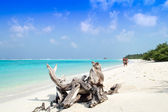 Tree Trunk on the Sandy Beach - Maldives — Stock Photo