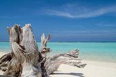 Tronco de árvore deixada na areia - Maldivas — Fotografia Stock