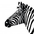 Vector illustration of zebra — Stock Vector