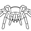 Stock Vector: Vector illustration of tarantula