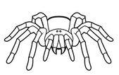 Vector illustration of tarantula — Stock Vector