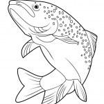 Vector illustration of salmon fish — Stock Vector
