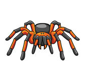 Tarantula — Stock Vector